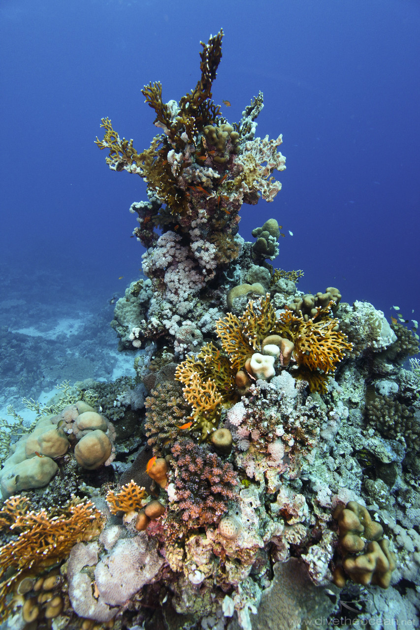 Hard coral sculpture