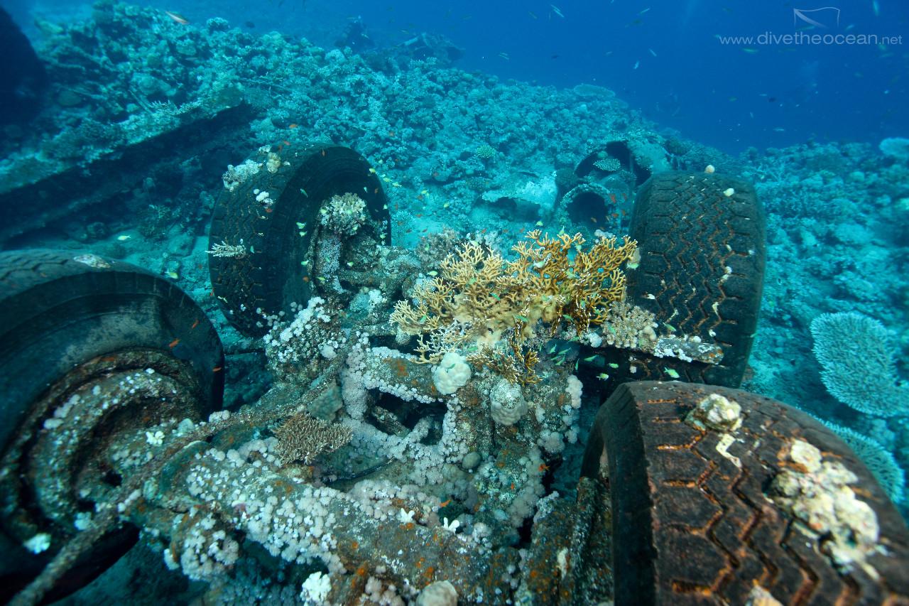 Toyota wreck - Sudan & fire coral