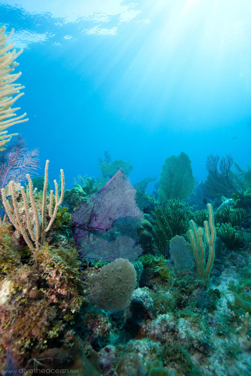 Caribbean reef