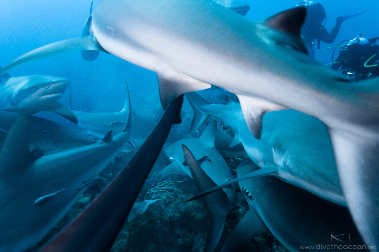Caribbean Shark's soup