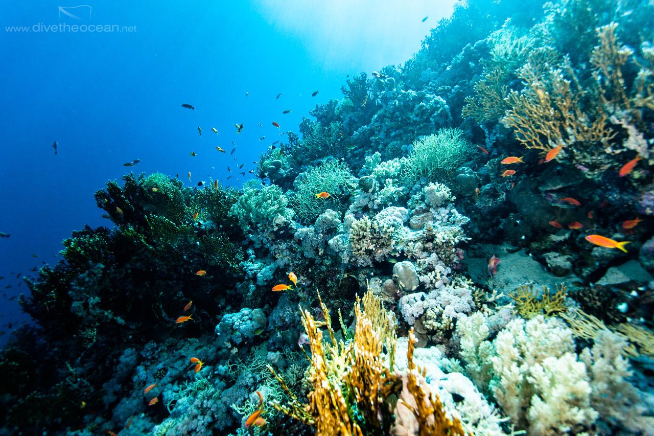 Ras Mohammed Reef