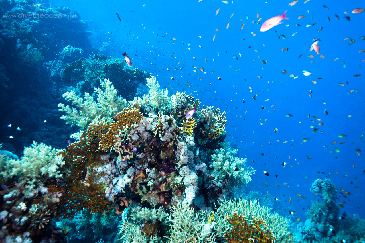 Ras Mohammed Reef Colours