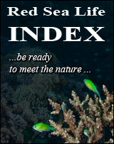 Red Sea Life INDEX banner