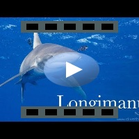 Longimanus GoPro session