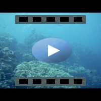 Great Barracuda HD video