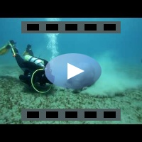 Dugong - Marsa Alam (Full HD 1080p video)